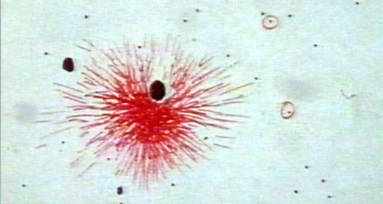 Neil Taylor Experimental Animation